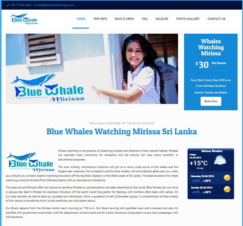 blue_whales_mirissa